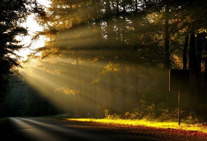 foresta, alberi, strada, alba, sole, mattina, natura