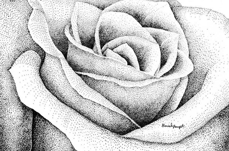 """""""Point Rose"""" By Moriah Hengst Pen & Ink"""