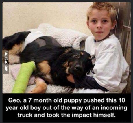 We don't deserve dogs.