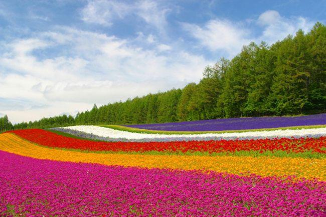 13 Campos de flores maravilhosos - Furano Fields, Hokkaido, Japão