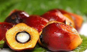 Manfaat minyak kelapa sawit http://www.agroindustri.id/2016/10/5-aspek-kunci-dalam-melakukan-pelayanan.html