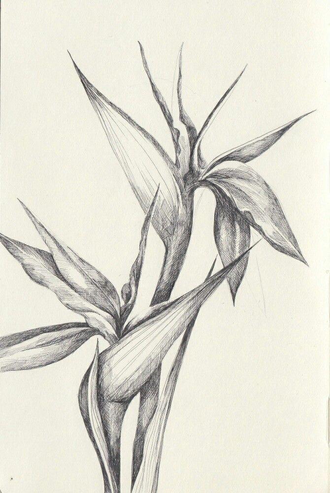 471 best botanical art images on pinterest botanical