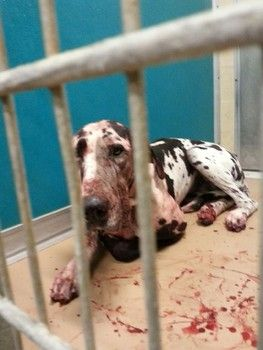 Beaten by ACO and sentenced to death-- Please share far and wide. They will kill her after abusing her to cover up for their cruelty!!!