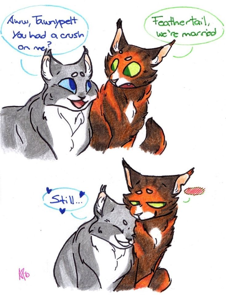 Details about Erin Hunter Warrior Cats Warriors The New