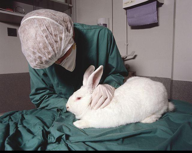 The 25+ best Mary kay animal testing ideas on Pinterest Beauty - animal specialist sample resume