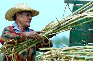 Fairtrade sukker