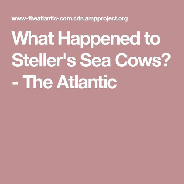 What Happened to Steller's Sea Cows? - The Atlantic