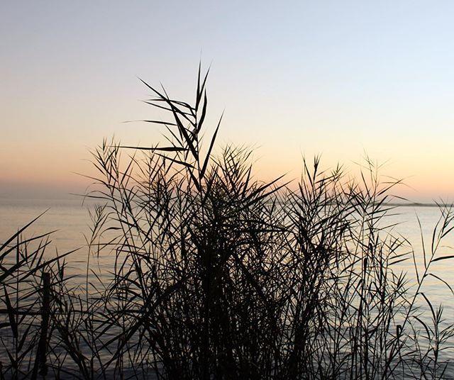 #hazfoto a cualquier hora, en cualquier lugar... #naturaleza #natureperfection #naturephotography #laguna #lake  #amanecer #violethour #violet #travelgram #travelblog #travelphoto #photography # by la_dementa. travelgram #travelblog #violethour #naturephotography #photography #travelphoto #laguna #hazfoto #naturaleza #lake #amanecer #natureperfection #violet #eventprofs #meetingprofs #popular #trending #events #event #travel #tourism [Follow us on Twitter (@MICEFXSolutions) for more...]