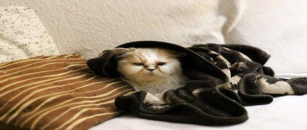 การด แลส ขภาพแมว ในช วงหน าหนาว แมวน อย ส ตว เล ยง