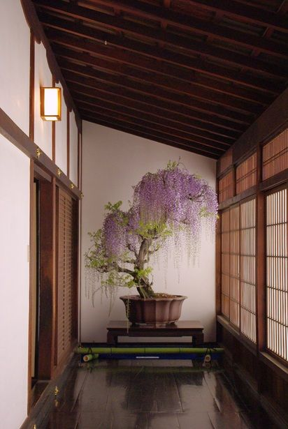 Japanese wisteria bonsai - stunning example of bringing the outside in -  -  To connect with us, and our community of people from Australia and around the world, learning how to live large in small places, visit us at www.Facebook.com/TinyHousesAustralia