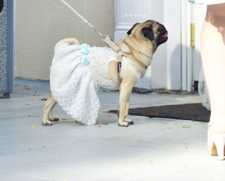 Wedding Dog Dress | Lace dress for dog flower girl | 15 colors to choose from to match the perfect day | Sizes XS S M L