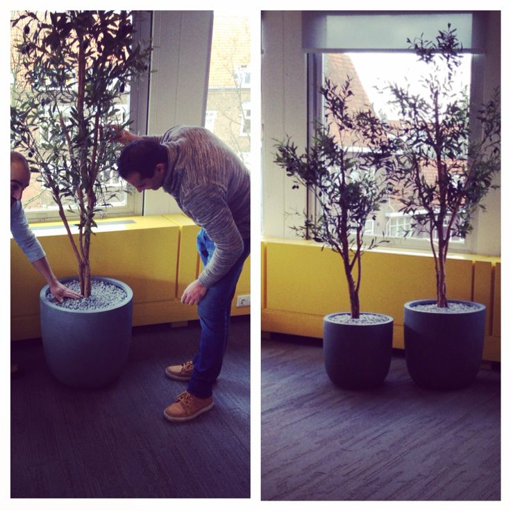 Olive tree in office #artificial tree