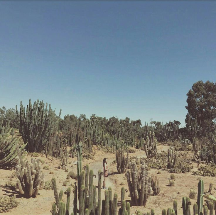 amazing weather visit at the cactus country