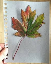 Image result for maple leaf drawing