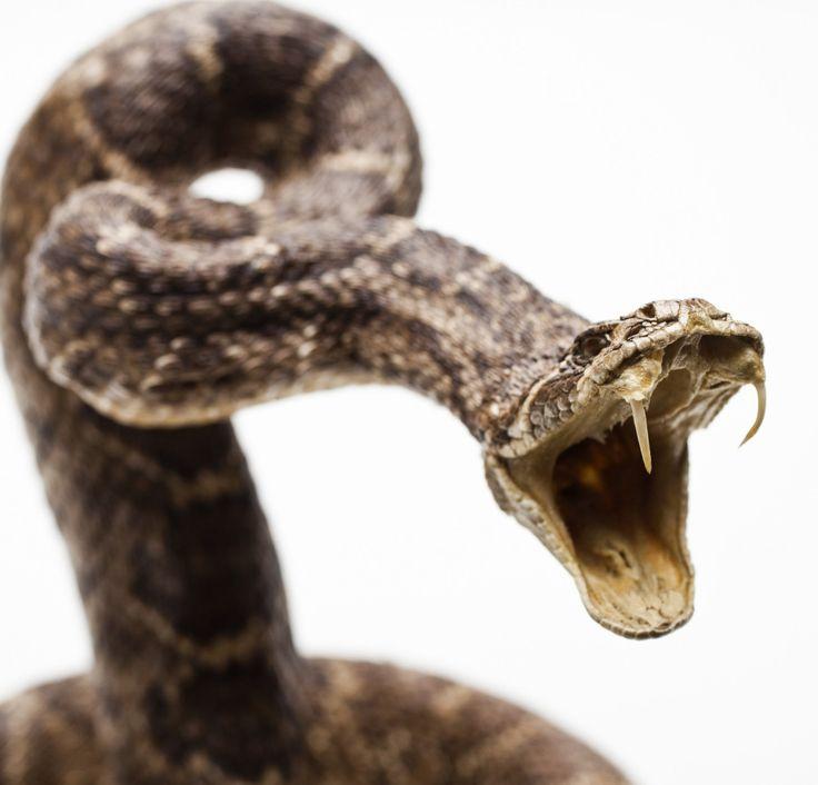 картинки змея с клыками парк находился