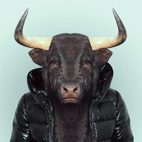 Bull #badass #jacket #animal #as #human #design #bull