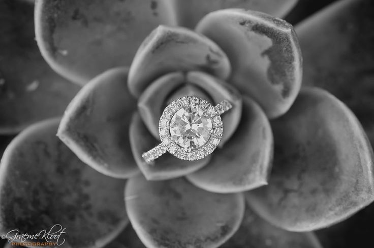 2 carot diamond ring on succulent plant - Graeme Kloot Photography