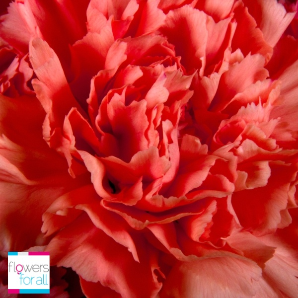 Fun and happiness are reflected with orange carnations. Flowersforall.com have different orange tones for you to choose from.