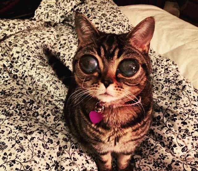 Ms de 25 ideas increbles sobre Ojos ms grandes en Pinterest