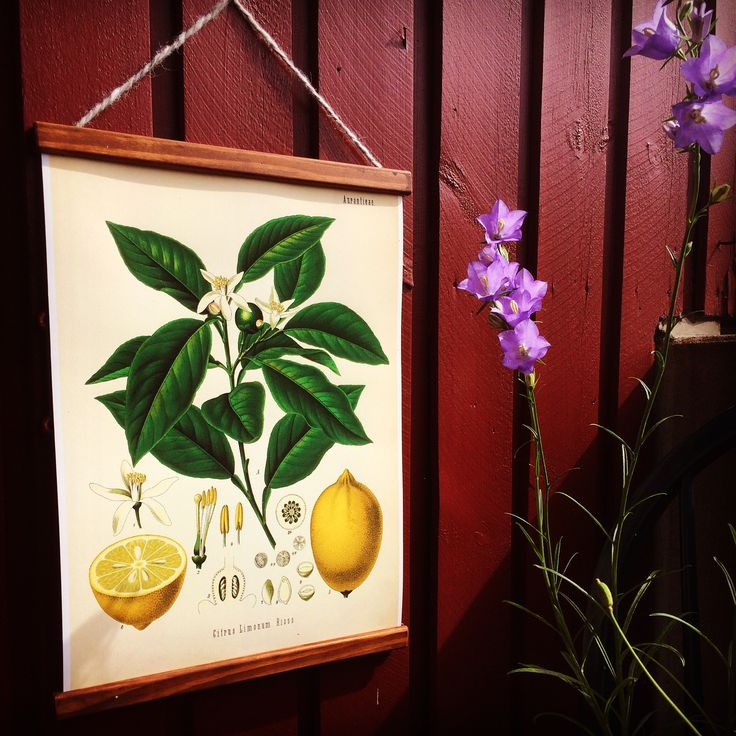 Big lemonposter! Frame handmade in Sweden. Retro feeling on the balcony!