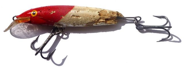 Rapala destroyed by a tigerfish