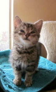 : Eyelids Repair, Eyelids Less Kitty, Animal Gotta, Sweet, Pet, Eyelids Less Kittens Please, Precious Gus