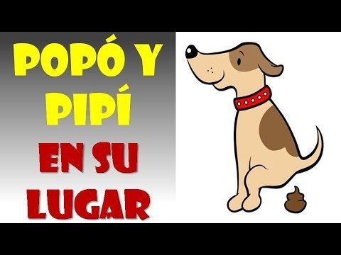Como enseñar a un perro a hacer sus necesidades en un solo lugar - YouTube