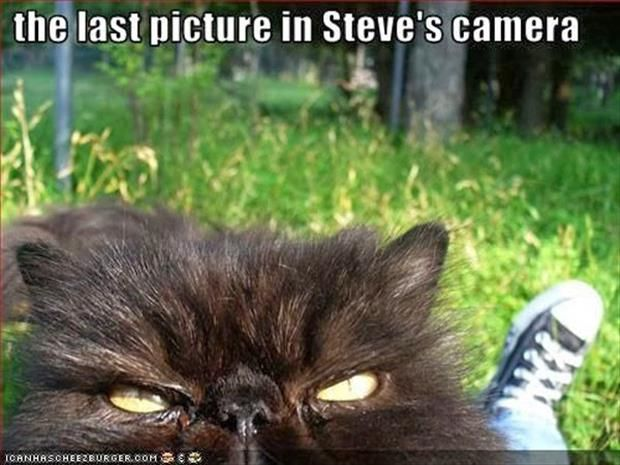 Bye Bye Steve
