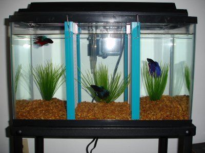 128 best the betta project images on pinterest for Best place to buy betta fish