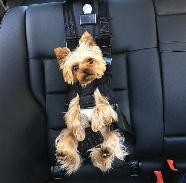 Dog Seatbelt Seat Belt