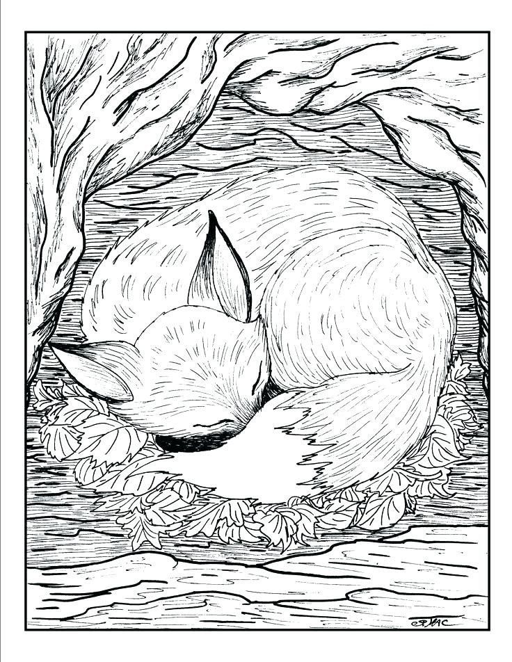 Realistic Animal Coloring Pages To Print Realistic Animal Coloring Pages To Print At Getdrawing In 2020 Coloring Pages Nature Fox Coloring Page Detailed Coloring Pages