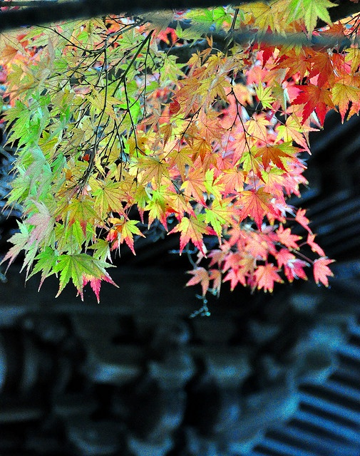 Japan autumn leaves: Photo