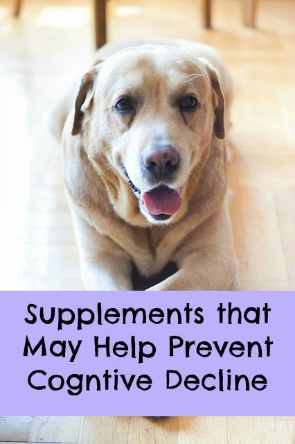 Canine Cognitive Supplements Good Things To Know Pinterest