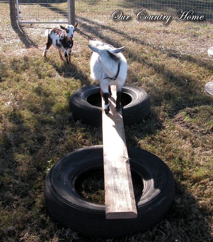 *Our Country Home...: Goat Playground. Ok I know this says…