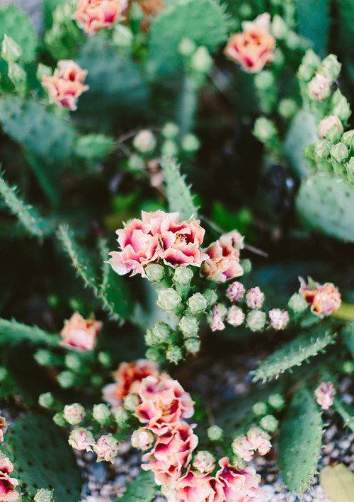 Cactus Tumblr Beautiful Flowers Lavender Farm