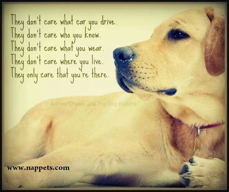 Quotes About Dogs 57 Best Dog Quotes Images On Pinterest  Dog Quotes Doggies And Dog