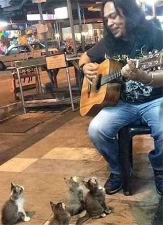 This Street Musician Was About To Call It Quits… But Then These Kittens Showed Up To Listen