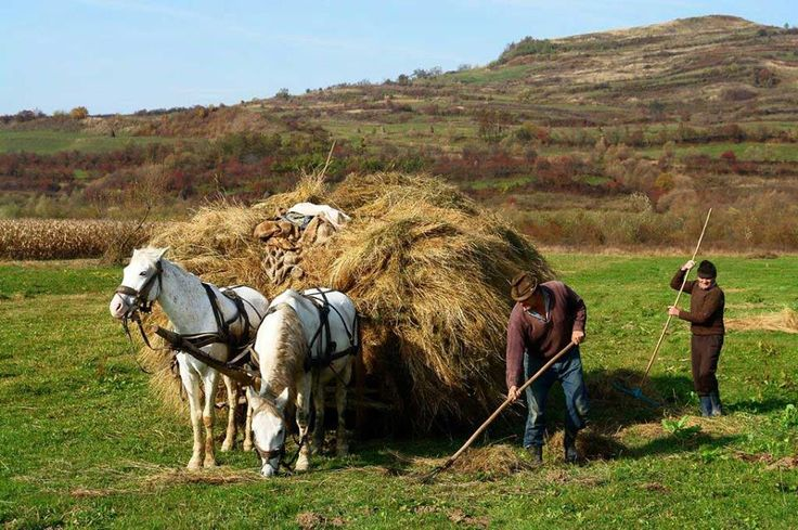 #autumntradition in Romania - Peasants Working in Field