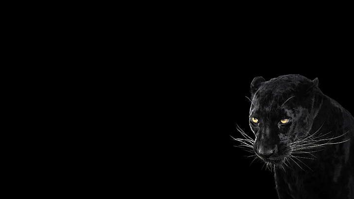 Black Panther Animal Wallpaper Fresh Hd Wallpaper Panther Black Background Cool Animal Of Bla In 2020 Animal Wallpaper Black Panther Hd Wallpaper Black Jaguar Animal