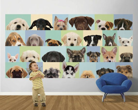 Dog Wallpaper For Walls 49 best wallpaper images on pinterest | girl and dog, walking and