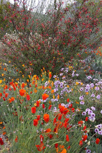 Leaning Pine Arboretum - California Native Landscape by Melissa-Gale, via Flickr