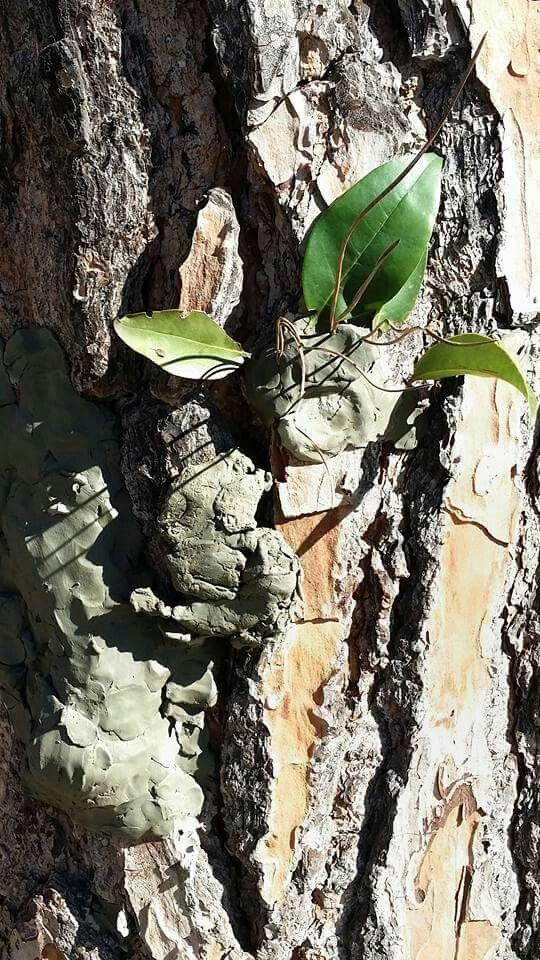 """La Voce degli Alberi. Gli alberi ci parlano, impariamo ad ascoltarli. Sapete che gli alberi parlano tra loro? Sono come una grande famiglia, alcuni stretti e alti, altri grossi e bassi. Tutti diversi e tutti speciali, proprio come noi. Maschere di argilla su grossi """"amici in giardino"""" e abiti speciali dove poter disegnare gli alberi, per un lavoro """"sull'identità vegetale"""". Noi siamo negli alberi, gli alberi sono in noi... ma che solletico! #atelierista #materna #lavocedeglialberi #outdoor"""
