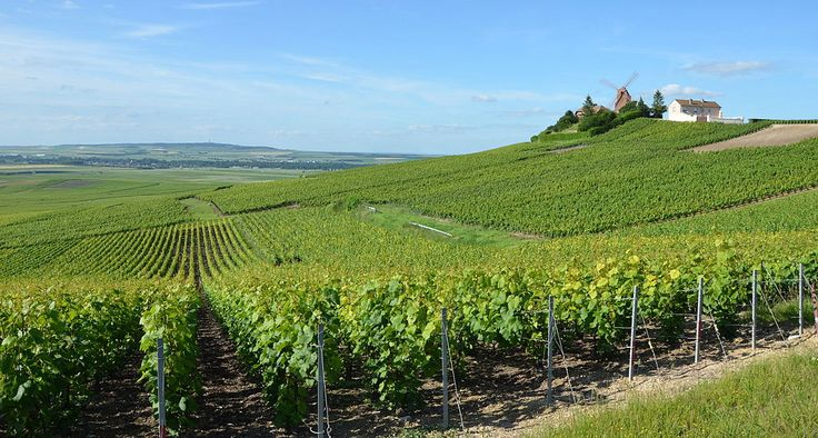 Vigneti di champagne - By Pline (Own work) [CC BY-SA 3.0 (http://creativecommons.org/licenses/by-sa/3.0)], via Wikimedia Commons