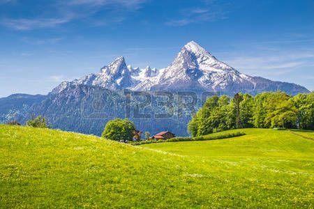 hill: Paysage idyllique dans les Alpes avec des prairies vertes fraîches et fleurs épanouies et les sommets des montagnes enneigées en arrière-plan, Nationalpark Berchtesgaden, Bavière, Allemagne