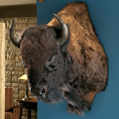 Authentic Buffalo Turned Head Shoulder Mount Products