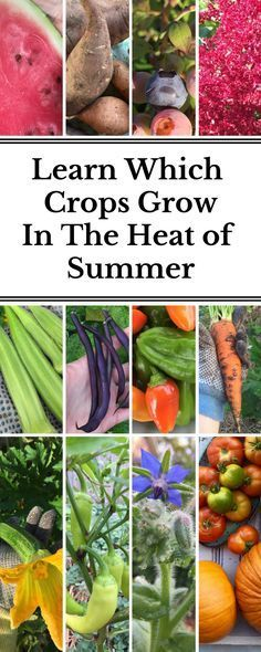 Wondering which crops can take the heat and which need to get in the kitchen before the hot days are upon us? This article explains the difference between warm season and cool season crops and which to grow when!