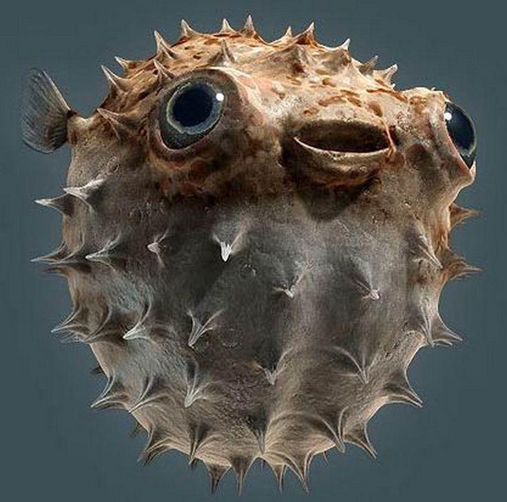 Blow Fish - Fugu.