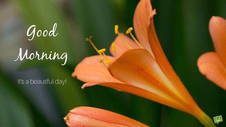 """Just like we would wish """"good morning"""" to someone who's present, we can share a beautiful and optimistic picture of landscapes, flowers, cute animals or a photo of a pleasant moment in our daily lives. If you like our """"Good Morning!"""" collection, then please share it with your friends."""