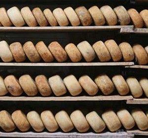PECORINO DELLE COLLINE SENESI P.A.T. Formaggio grasso, di breve o media stagionatura, a pasta semidura. Formaggio conosciuto in tutto il territorio italiano e apprezzato per le caratteristiche organolettiche concesse dal latte ovino di origine, così come dalla stagionatura, che avviene su tavole di abete.