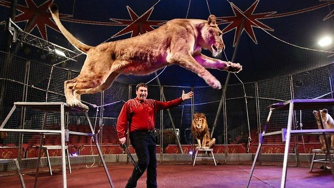 Exchange of animals-Facts about circuses